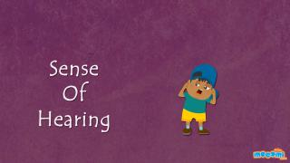 Sense of Hearing