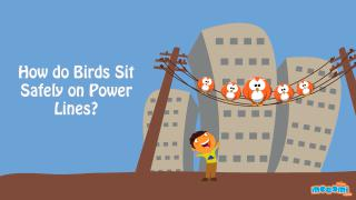 How do Birds sit Safely on Power Lines
