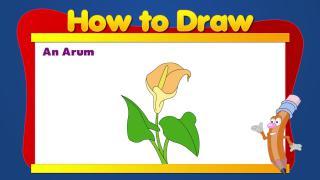 Draw an Arum