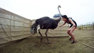 The exhausting Ostrich task