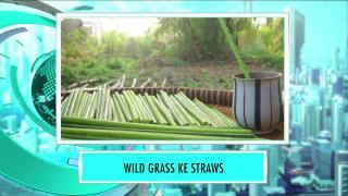 Wild Grass Straw