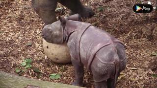 EP 02 - Baby Bali Rhino