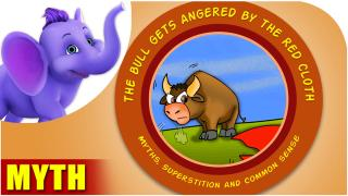 The bull gets angered by the red cloth